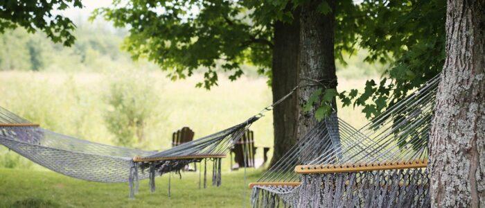 Wiosna w ogrodzie – inspiracje od Netto